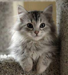 Elegant little kitty
