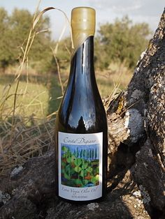 The Rare Le Marche Mignola Olive Oil: Costa Digiano,Cingoli