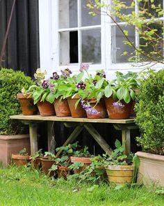 Mette Krull terra cotta pots wit Primrose - All For Garden