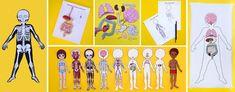 Free Printable Life-size Organs For Studying Human Body Anatomy With Children - Pinokyo Human Body Science, Human Body Activities, Science Activities, Human Body Organs, Human Body Systems, Skeleton For Kids, Human Body Anatomy, Anatomy Models, Paper Dolls Printable