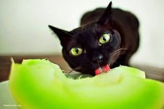 Eating melon