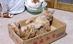 Cat & Box Meet Again for an Epic Nap Time (Video)