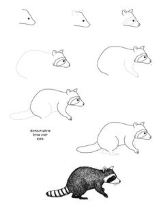 How to draw a raccoon step-by-step (kids, art)