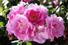 Rose Libri Musica Vino: parola chiave Bellezza   Parco di San Giovanni - Trieste