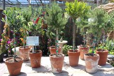 Orchard Nursery And Florist Is The 2015 Revolutionary 100 West Regional Winner   Today's Garden Center