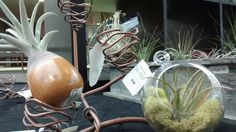Creative ways of displaying air plants