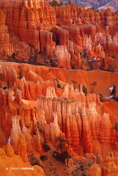Glowing hoodoos at Bryce Canyon National Park, Utah, USA. This WAS my favorite national park in Utah. Bryce Canyon, Canyon Utah, Places To Travel, Places To See, Monument Valley, Grand Parc, All Nature, Le Far West, Virginia Beach
