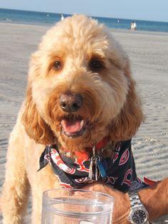 Harry at Mayflower Beach, Dennis, MA