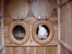 Très important dans un poulailler les pondoirs!! En effet c'est le lieu où vos poules iront pondre leurs œufs. Alors comment les faire? Voici un petit article qui va vous montrer comment réaliser des pondoirs pour poulesà partir de matériels de récupération, cela va peut être vous donne...