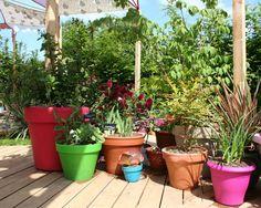 Des pots de toutes les couleurs (Scènes de jardins)