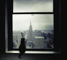 Snowy Weather by Violet Kashi, via Flickr