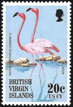 Islas Vírgenes Británicas- El Flamenco del Caribe o Flamenco Rojo