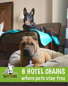 Pet Friendly Hotels Where Pets Stay Free - With pet travel on the rise, many pet friendly hotels are rolling out the red carpet for our four-legged companions. Dog Friendly Hotels, Pet Friendly Stores, Pet Friendly Motels, Dog Travel, Travel Tips, Travel Hacks, Free Travel, Family Travel, Roadtrip
