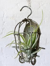 Despite all my rage I 39 m still just a plant in a cage In true ESWz style this Industrial Cage Light has been vacatePrice - $195.00-vl8AZ0II