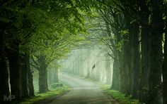 A magical tree lined road in Goor, Netherlands. Martin Podt Photography