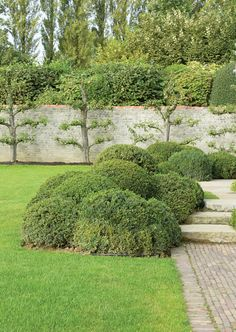 Belgian... Espalier + good info on espalier process at http://thinkingoutsidetheboxwood.com/?p=3722