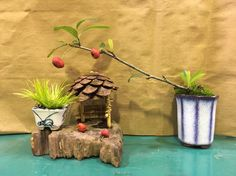 王紫蘭 Mini Bonsai, Planter Pots
