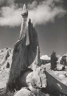 1945 Stump and Clouds, near Young Lakes, Yosemite National Park by Ansel Adams 84.91.2