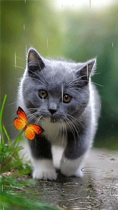 Котенок с бабочкой под дождем - анимация на телефон №1195460