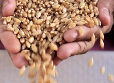 Commodity Basis strive to provide the latest updated and future prices for grain such as wheat and for suger, oil seeds etc. To know more go through Commodity Basis for updated cash price information.