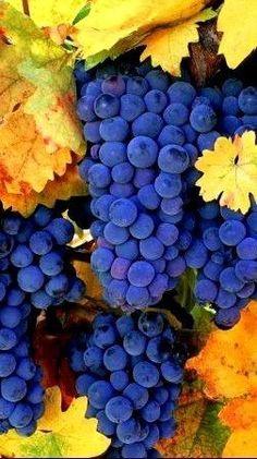 Shashlik Recipes, Fruit Photography, Fruit Garden, Tutti Frutti, Fruit Art, Food Coloring, Fruits And Vegetables, Decoration, Harvest