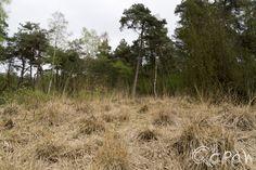 De Boekhorst in het groen ; Droog gras | foto 5 http://blog.qdraw.nl/gelderland/de-boekhorst-in-het-groen/