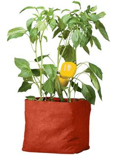 Colorful Pepper Grow Bag - I'm trying a few of these this year on my deck. Got one for tomatoes and then using the smaller ones for peppers, bush beans, and cherry tomatoes.