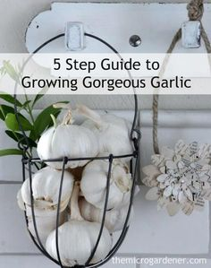 Do you know where your garlic comes from? One of the most important reasons for you to learn to grow garlic is: to avoid toxic chemicals and irradiation (that inhibit sprouting and extend shelf life).*