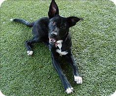 Birmingham, AL - Labrador Retriever Mix. Meet Taco a Dog for Adoption.