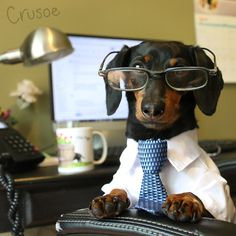"""Wait a minute - I thought it was 'Bring Your Dog to Work Day', not 'Make Your Dog Do Your Work Day'?!"""