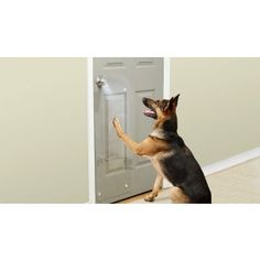 Diy tip of the day protecting doors from dog scratches protect dogs cant knock but they can scratch when they want to go out or come in dont let your dog damage your door protect from scratches and scuffs eventshaper