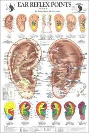 Image result for auricular-acupuncture