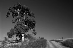 Road to the farm - Black & White photography