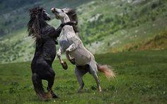 INCREDIBLE ANIMAL MOMENTS – 18 PHOTOS