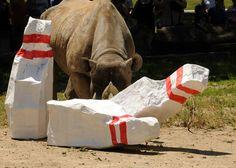Bowling with rhinos