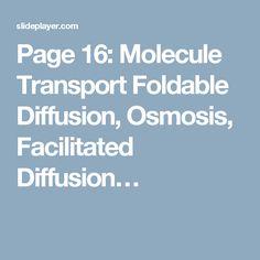 Page 16: Molecule Transport Foldable Diffusion, Osmosis, Facilitated Diffusion…