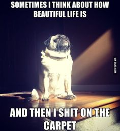 Enlightened Doggy