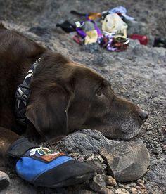 Life of a crag dog #FiveTen #RockCreek