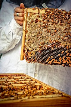 Are flow hives a good thing? According to this very interesting article, they may not be. Great read!