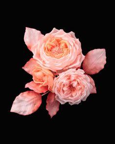 Maison Legeron | Legeron - Beautifully Crafted Flowers | Pinterest