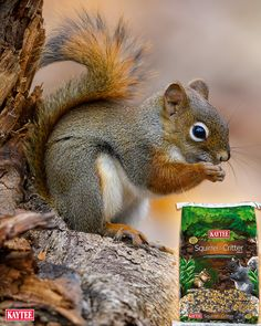 Backyard critter food attracts a variety of interesting characters to your yard. Squirrels, chipmunks, rabbits and more that are fun to watch! Squirrel Feeder, Wild Bird Feeders, Mural Ideas, Bird Food, Chipmunks, Wild Birds, Squirrels, Adorable Animals, Kangaroo