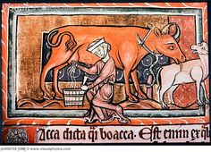 Peasant Woman Milking a Cow, England, Illustration, 13th Century