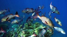 The reduction in individual fish size is predicted to coincide with a dwindling of international fish stocks.