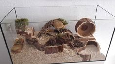 Too small But with nice layout Best Picture For Rodents control For Your Taste You are looking for something, and it is going to tell you exactly what you are looking for, and you didn't find that pic Hamster Tank, Hamster Diy Cage, Gerbil Cages, Bunny Cages, Hamster House, Hamster Terrarium, Habitat Du Hamster, Hamsters As Pets, Rodents