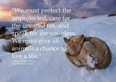 Coyote, Yellowstone National Park -- Animal Photo -- National Geographic Photo of the Day. Mercy For Animals, Animals And Pets, Cute Animals, Wild Animals, Strange Animals, Baby Animals, Demotivational Posters, Beautiful Creatures, Animals Beautiful