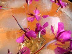 Herkkusuun lautasella-Ruokablogi: Horsmamehu ja hyytelö