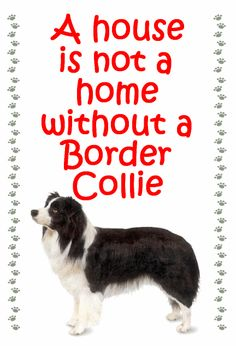 A house is not - Border Collie  - New Slap-on fridge magnets