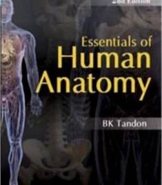 Download free bd chaurasias human anatomy vol 1 upper limb essentials of human anatomy pdf fandeluxe Images