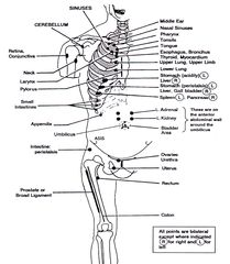 Osteopathic Chapman Points Straight From The Best Source