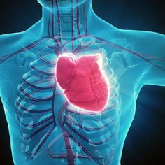 Electrically-trained muscle cells get damaged hearts pumpingThe researchers will now investigate how these trained cardiomyocytes might be safely integrated into real-life heart muscle